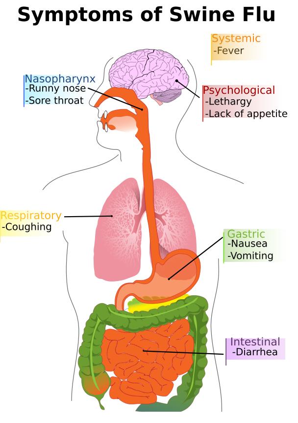 Symptoms of Swine Fu